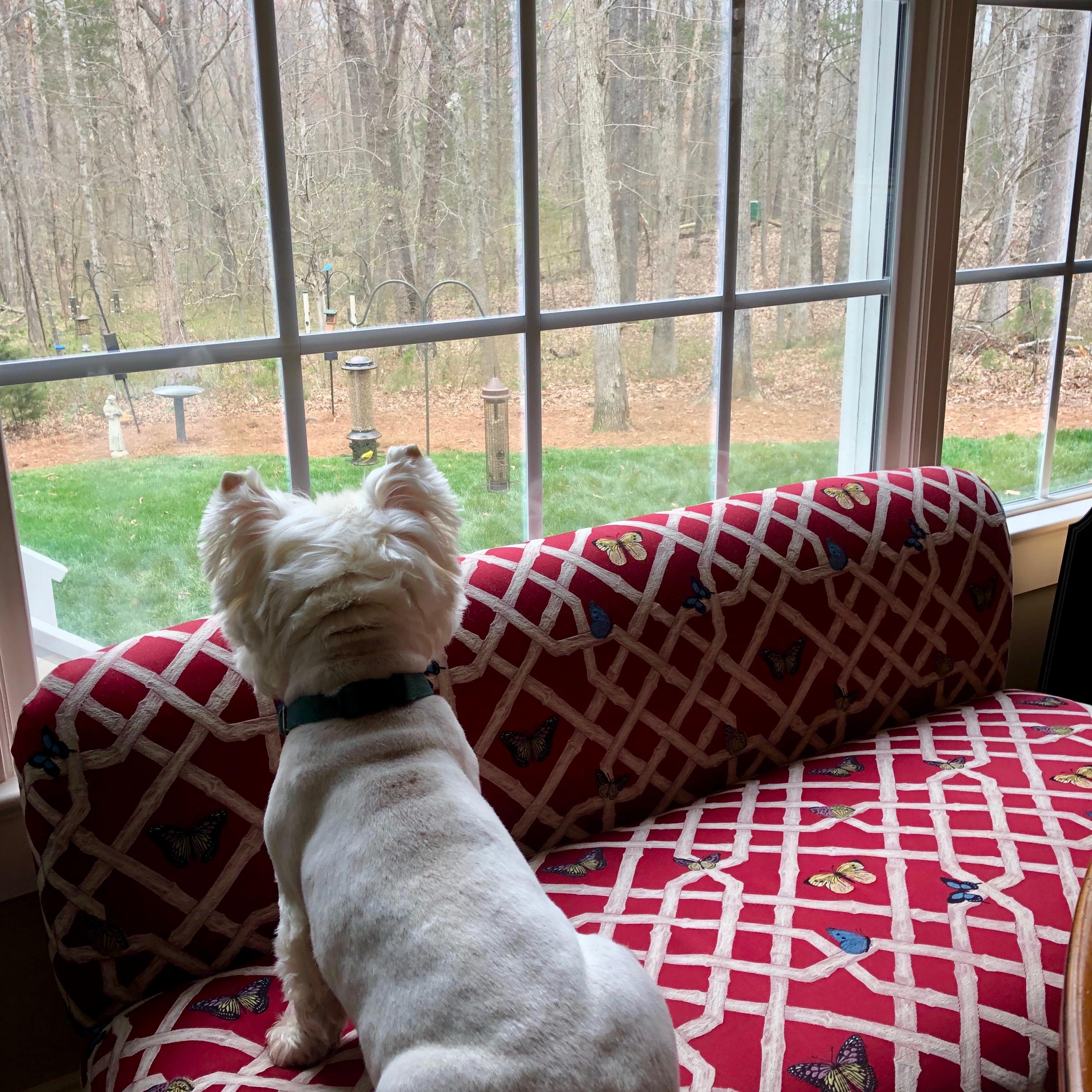 Mac on watch