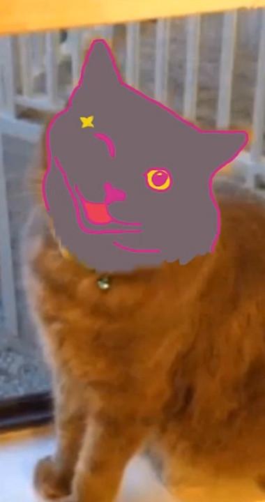 Cat Story 2