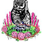 OwlWIP002