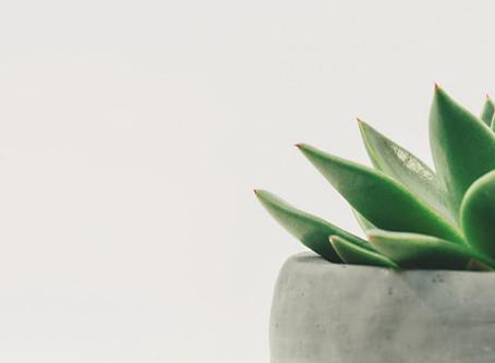Een zuivere lucht dankzij planten