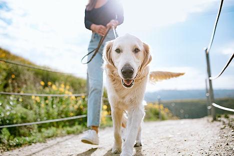 Zurich-Zug dog walker, dog walking services, solo one-on-one dog walks, group dog walks Zurich, Zug, Kuesnacht, Meilen, Rapperswil-Jona, Wollerau, Tahalwil, Kilchberg, Rueschlikon, zug, Cham, Baar, Walchwil, Oberwil, Buonas, Risch