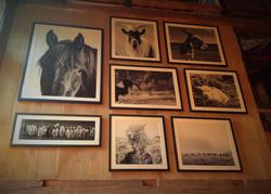 Barn Reno Animals