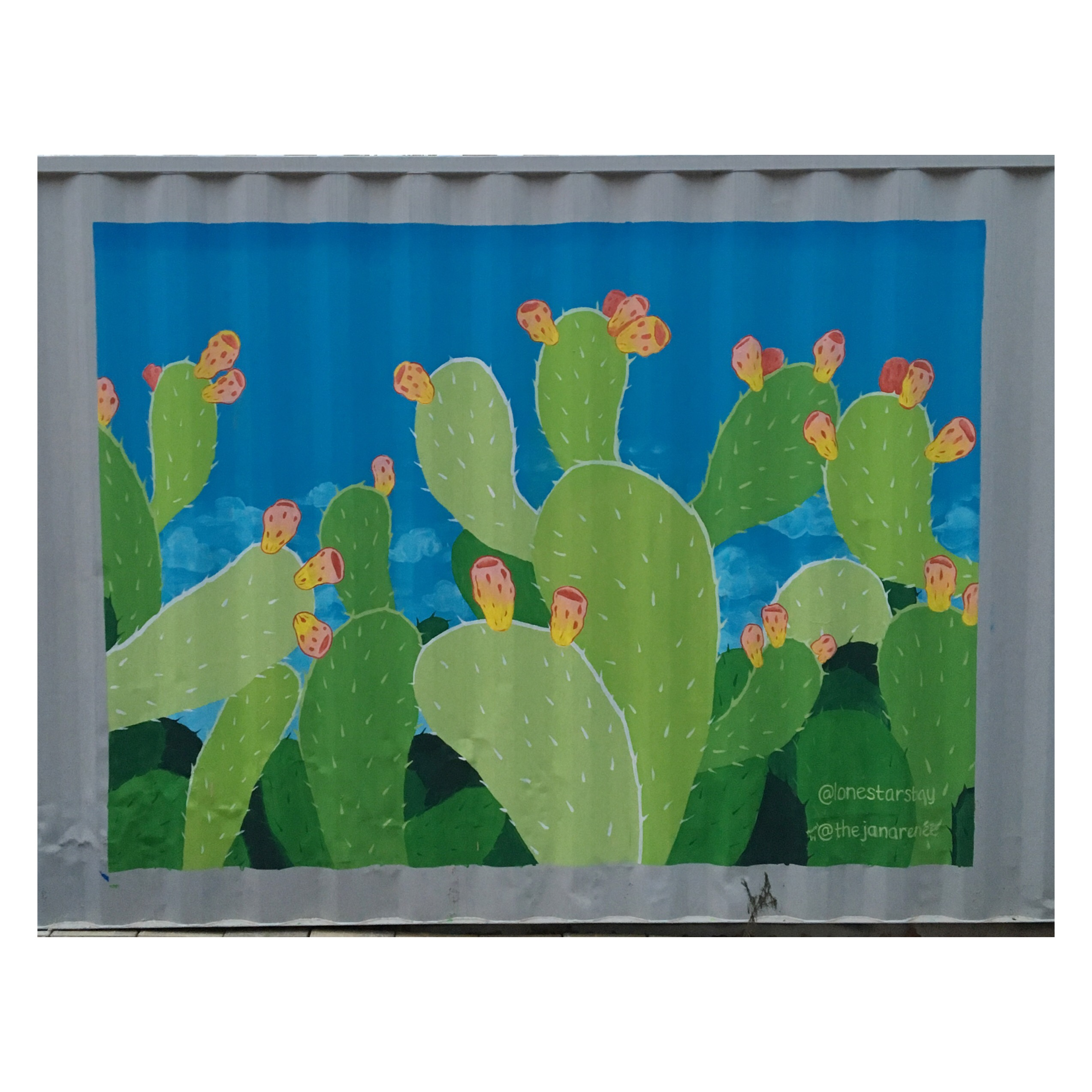 LoneStarStay Cactus