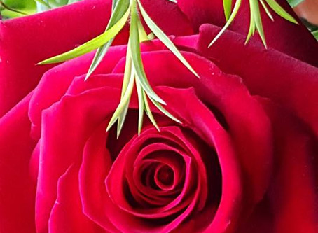 My Story …  Finding the Rose of Love