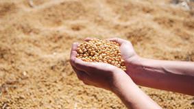 PIB do agro sobe 16,81%: produtores rurais obtém recursos via CPRs digitais