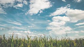 Apenas o clima é responsável pelas baixas produtividades de milho 2ª safra em 2021?