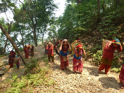 Group of Nepali women carrying large baskets. Baskets carried on backs with tumpline across heads