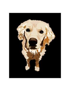 DOG PORTRAIT (Shiloh)