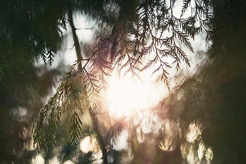 soleil-branche.jpg
