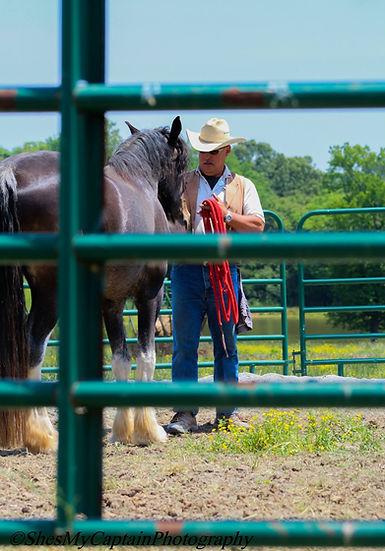 Kenny-HorsesForHolly11.jpg