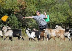 goat lady