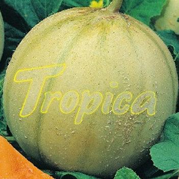 Melon Cantaloupe Charentais