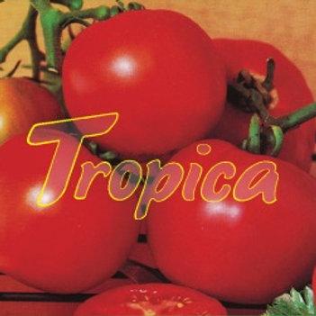 Tomato Carioca