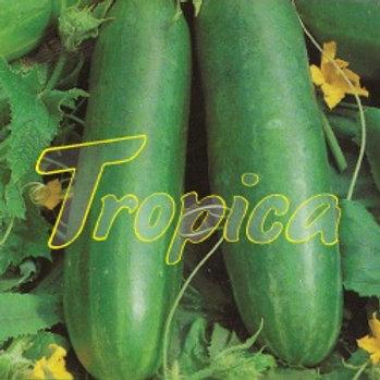 Cucumber Poinsett