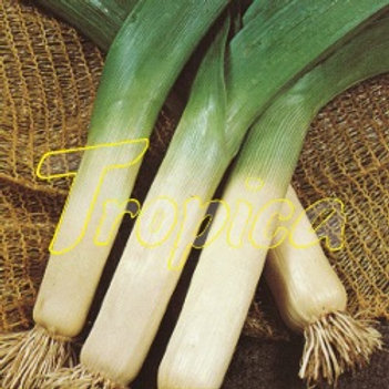 Leek Gross Long D'Ete