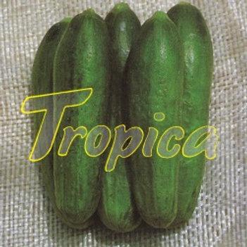 Cucumber F1 Basma