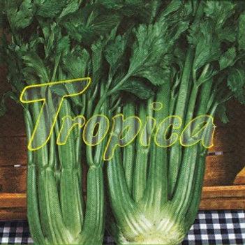 Celery Elne