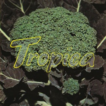 Broccoli Lola F1