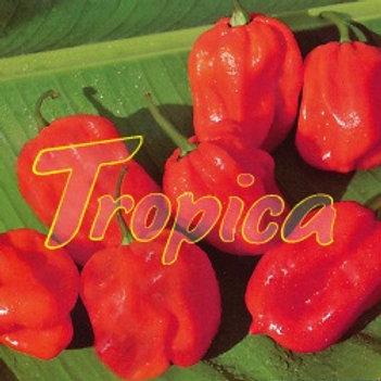 Hot Pepper Antillais