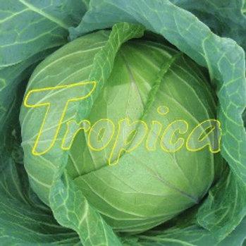 Cabbage F1 Tropica Cross
