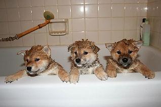 水素風呂に入る犬