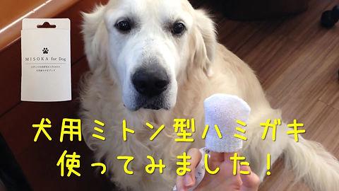 犬用ミトン型ハミガキ使ってみました!