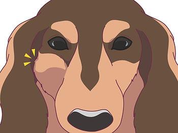 頬腫れ犬191113_Illustration1.jpg