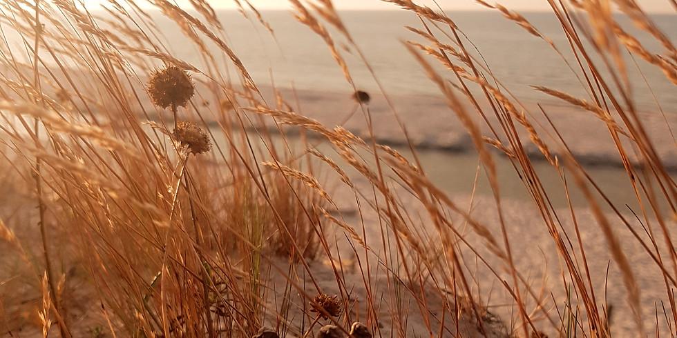 kursy uważności i współczucia na jesieni