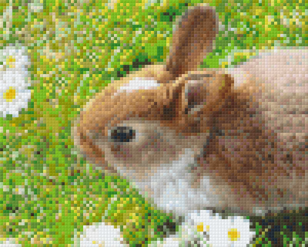 804_Rabbit.phd.jpg