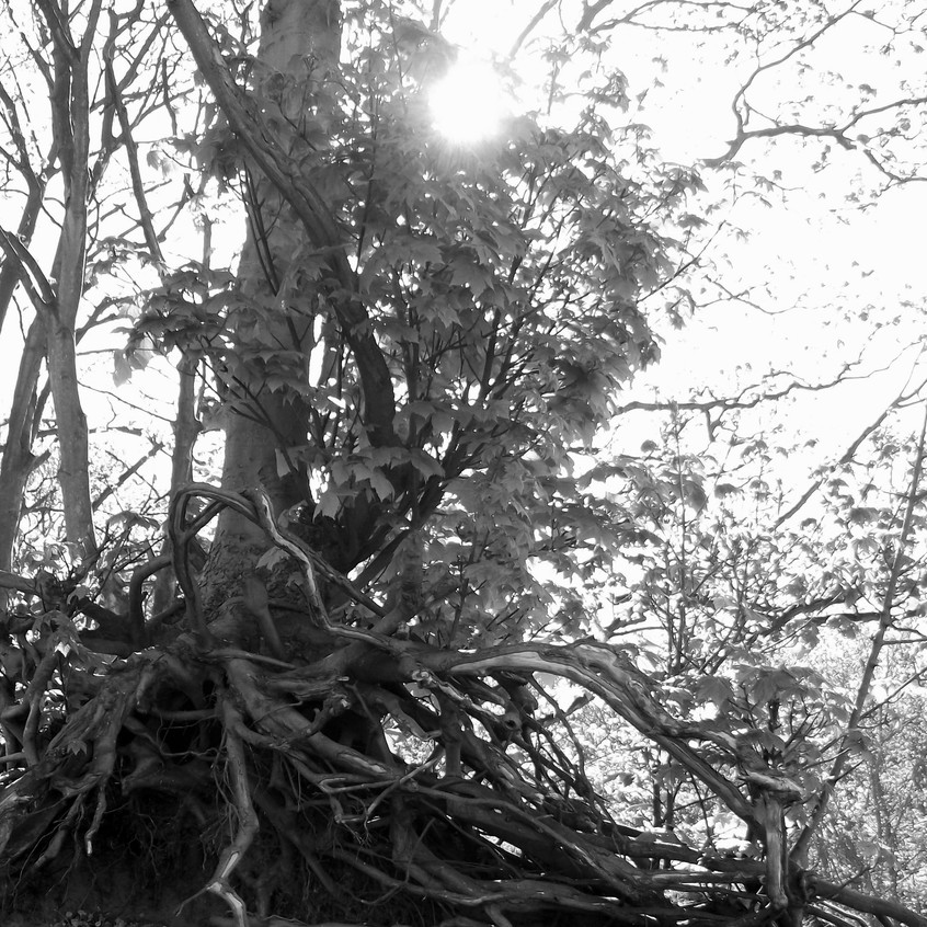 Sandy Woods - Medusa