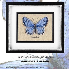 Phengaris Arion