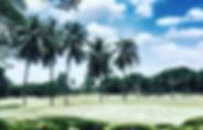 클락 미모사CC_5.jpg