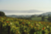 Vignes-Thorey-©-A.-Gislot.jpg