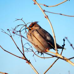 Sparrow on a twig