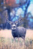 Southern Utah, Avid Hunter