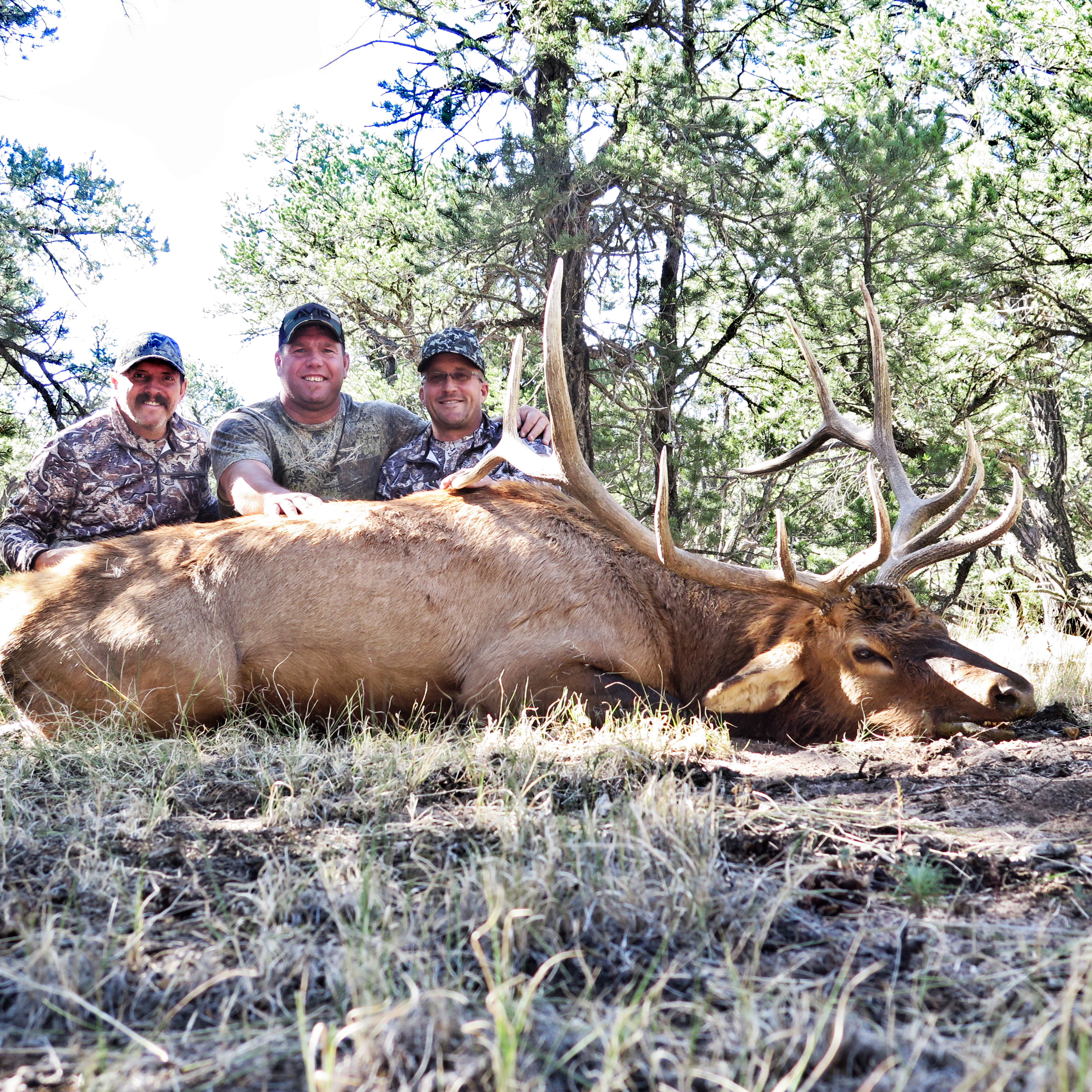 Mike Mecham's Elk 076