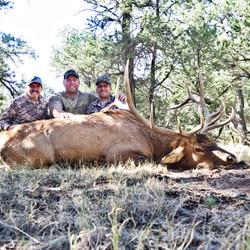 Mike Mecham's Elk 076