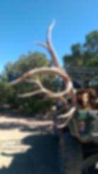 Avid Hunter, Indian Peaks, bull, elk, Southwest Desert, Elk Hunt, Avid, Southern Utah, Utah hunting
