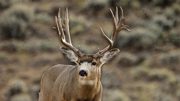 Mule Deer Outfitters.png