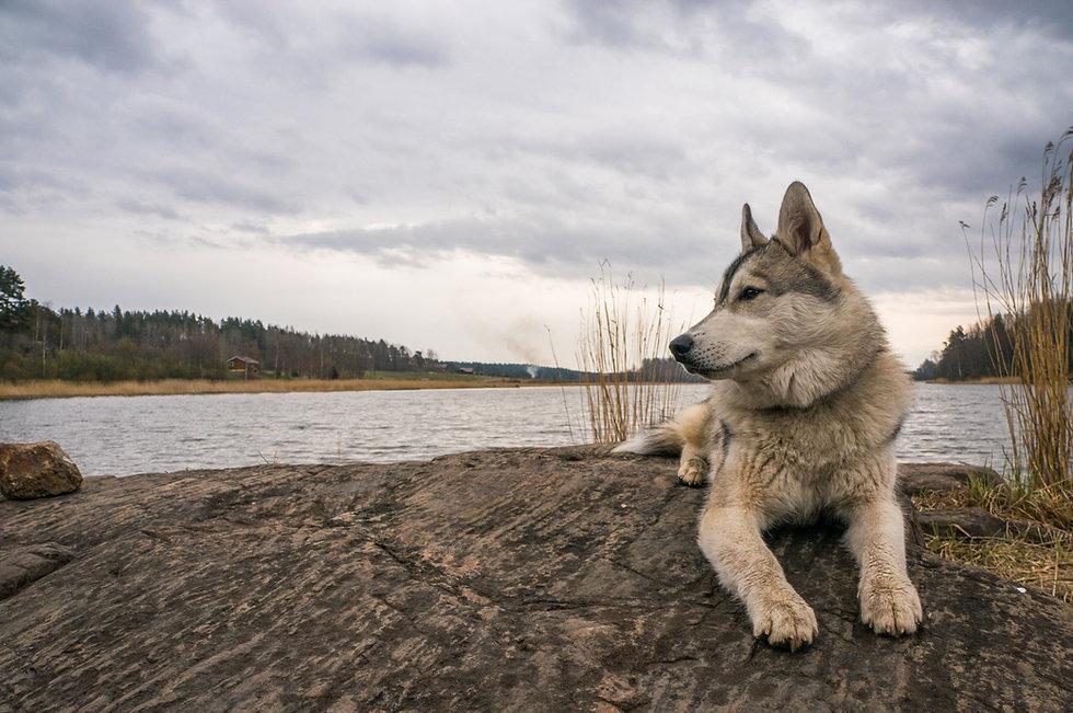 A Peaceful Pack Dog Training Tulsa & Skiatook Oklahoma
