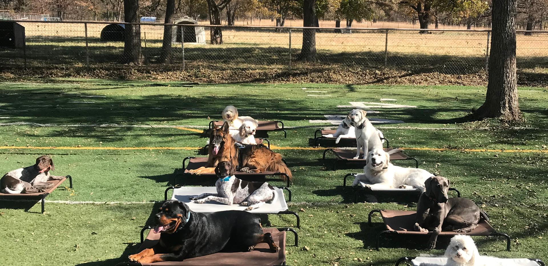 Rottweiler, golden doodle, daycare, plac
