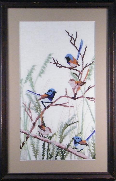 A907 Blue Wrens