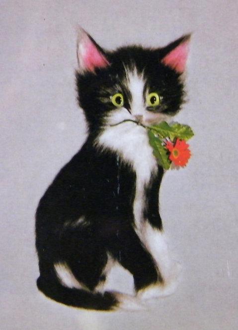 Kit 419 A Fluffy Black Kitten  Size 3