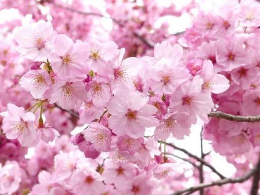 🌸春キャンペーン🌸