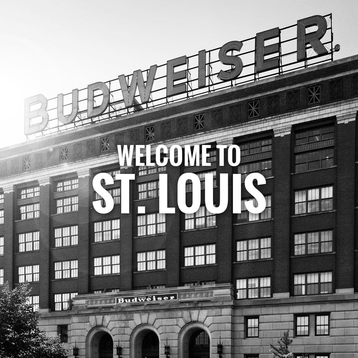 Family & STL Traditions Merge: Brewery Lights & Wild Lights