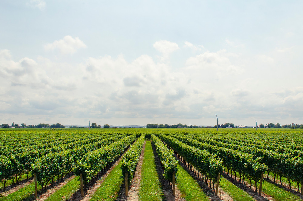 St. Louis Winery Tour
