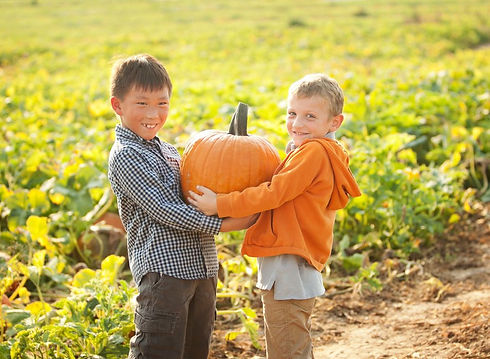 Eckert's Farm _ Pumpkin Picking _ Pumpki