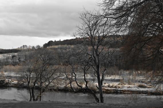 Les arbres à côté de la rivière