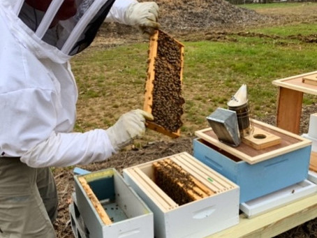 What's the Buzz? Woodside Farms Now Has an Apiary!