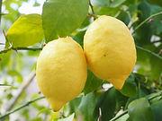 MaxPixel.net-Citrus-Lemon-Limone-Citrus-